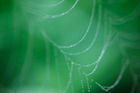 ploy: Spider Web Stock Photo