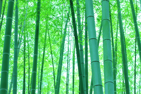 Extend: Bamboo forest