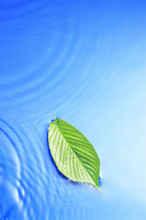 leaf water: Ripples and leaves