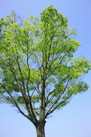 albero della vita: Alberi verdi freschi Archivio Fotografico