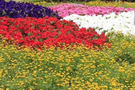 virágágy: Flower bed Stock fotó