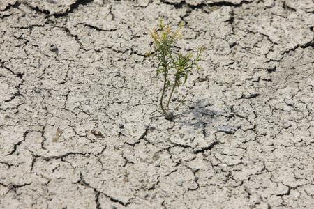 inbetween: Inbetween the cracking ground
