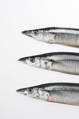 fishery products: Pike Stock Photo