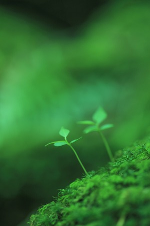 MOSS and sprouting Stock Photo