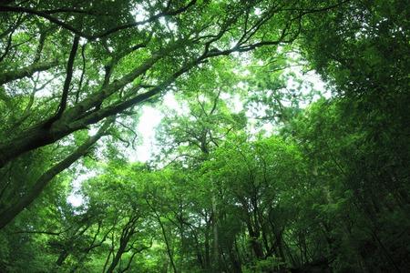 primeval forest: Primeval forest Stock Photo