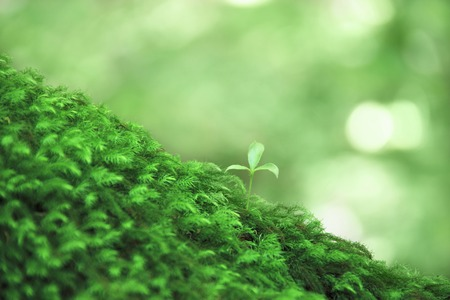 MOSS and sprouting Foto de archivo