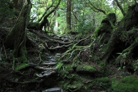 the world cultural heritage: Primeval forest Stock Photo