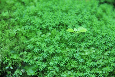 sprouting: MOSS and sprouting Stock Photo