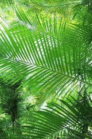 subtropics: Foglie di palma