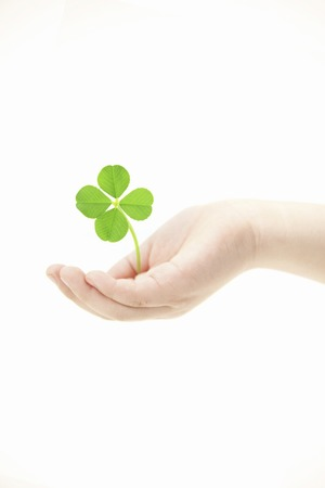 wellness environment: Hand with four-leaf clover