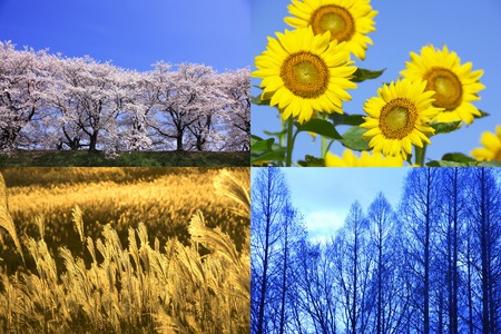 Four seasons of plant