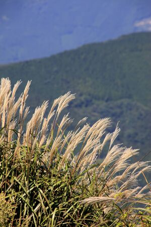 karst: Shikoku Karst sinensis Stock Photo