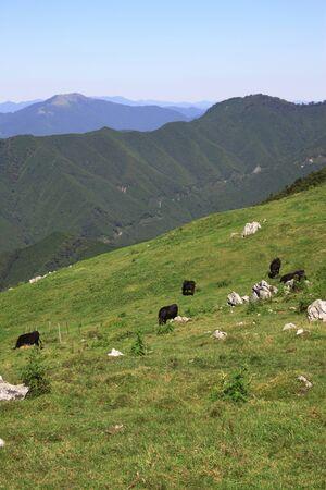 karst: Shikoku Karst Ranch