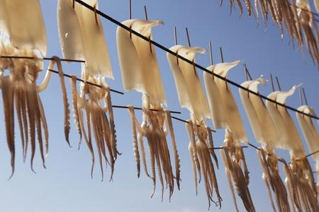 dried: Dried squid