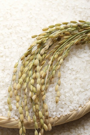 rice: Arroz Foto de archivo