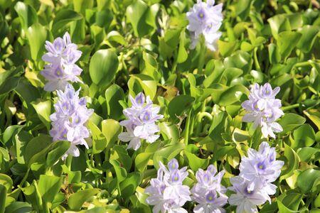 water purification plant: Baoding grass