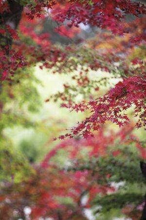 nara: Autumn in Nara