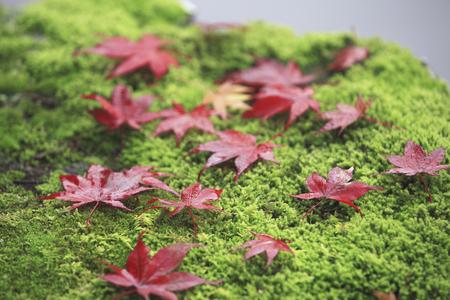 nara park: Maple leaf litter