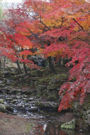 nara: NARA fall foliage