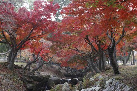NARA fall foliage
