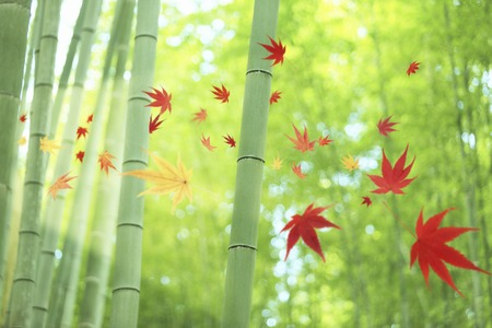 Bamboo forest and foliage image