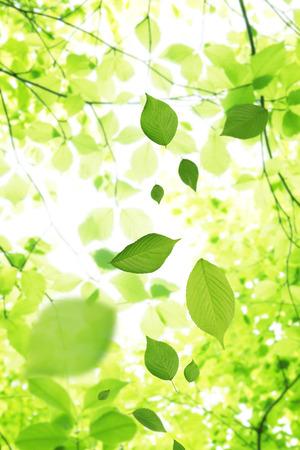 신선한 녹색 잎은 팔랑 팔랑 잎