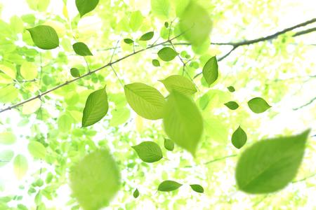 Fresh green leaves fluttering leaves