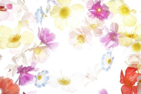 florid: Flower background