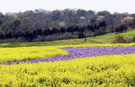 kana: Rape flowers and a purple Kana