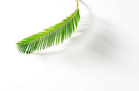 cycad: Sprout cycad