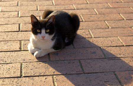 living organism: Happy cat