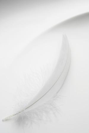 white feather: Plumas de blanco