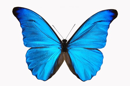 les: Blue Butterfly Stock Photo