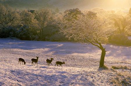 nara park: March of snow