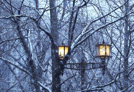 streetlights: Snow Osaka Midosuji and streetlights Stock Photo