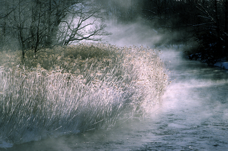 bacillus: Reed to freezing the river fog