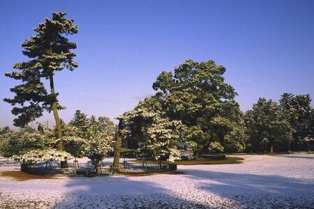 nara park: Of snow Nara Park