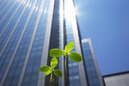 trabajo oficina: edificios de gran altura y nuevos brotes