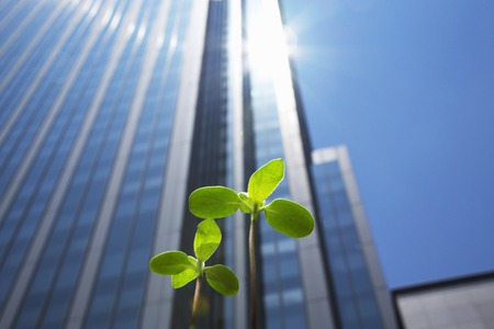 green building: High rise buildings and new shoots