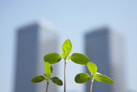 High rise buildings and new shoots