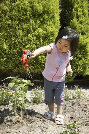 watered: Children have watered the seedlings of sunflower