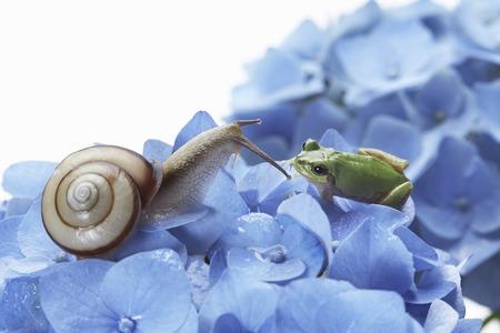 달팽이와 나무 개구리 스톡 콘텐츠 - 50116964