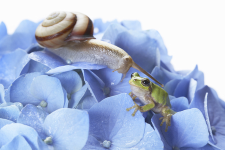 달팽이와 나무 개구리