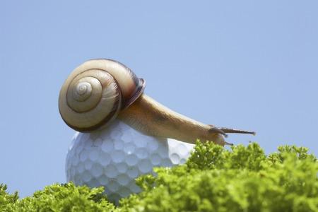 골프 공과 달팽이 스톡 콘텐츠