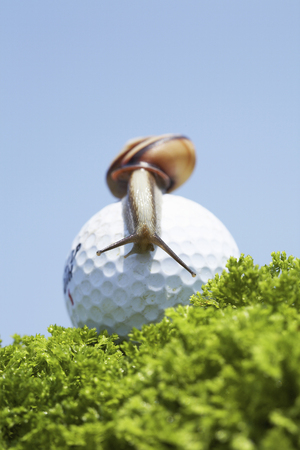 ゴルフ ボールとカタツムリ 写真素材