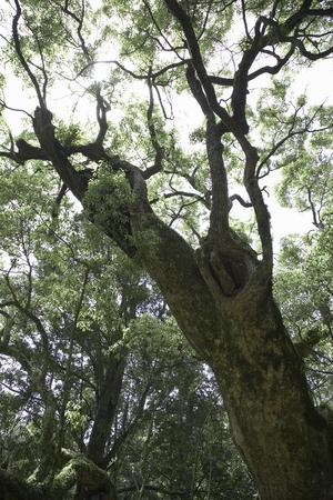 nara: Nara Kasuga Forest