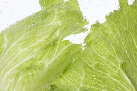 soaked: Lettuce soaked in water Stock Photo