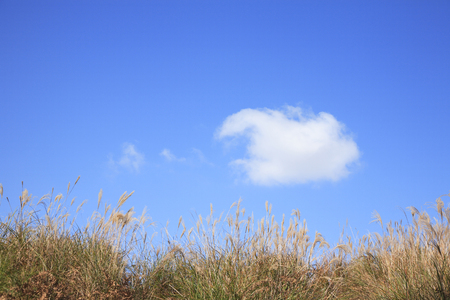 sinensis: Clouds and Miscanthus sinensis Stock Photo