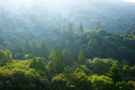 the world heritage: World Heritage Nara Kasugayama virgin forest