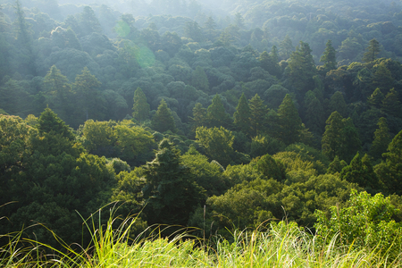 heritage: World Heritage Nara Kasugayama virgin forest